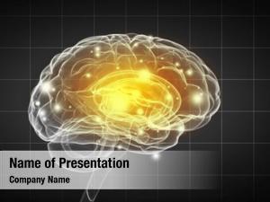 Brain science human gray