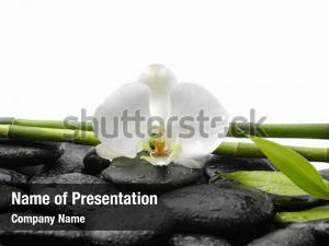 White orchid with wet