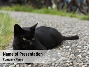 Squatting black cat floor watching