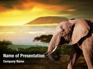 Landscape elephant savanna mount kilimanjaro