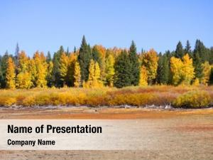 Trees colorful aspen pine trees