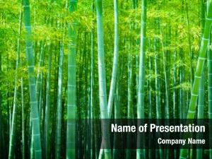 Forest, beautiful bamboo soft green