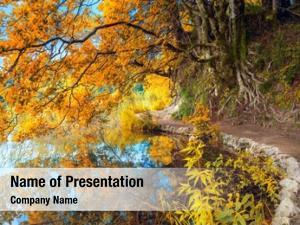 Big autumn landscape yellow tree,