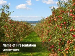 Farming apple organic landscape