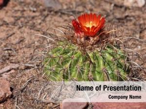South cactus flower american desert