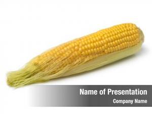 Corn corn cob silk white