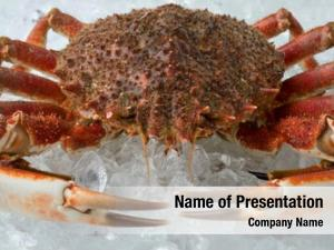 Spider whole cooked crab dish