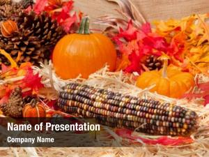 Theme autumn holiday pumpkins, corn,