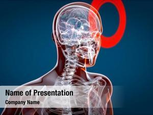 Xray, human brain human anatomy,