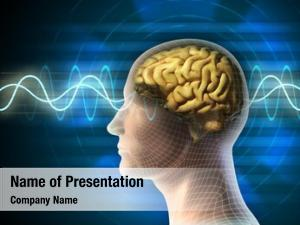 Brain human head
