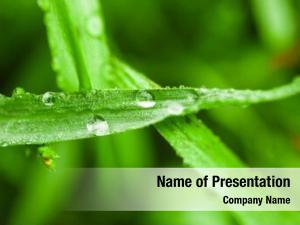 Grass fresh green dew drops