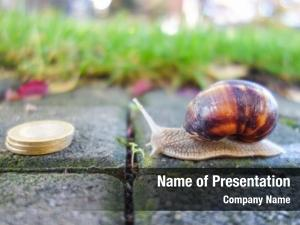 Coins snail moves