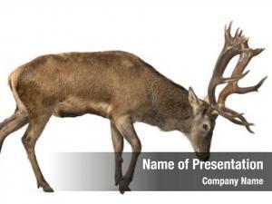 Roe interplay between deer fawn