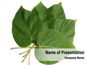Leaf tropical green
