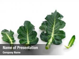 White broccoli leaf