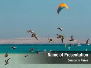 Gull flock sea grey feather