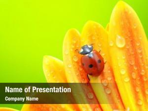 Sun ladybug flower