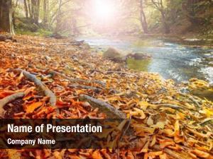 Forest, autumn stream gold autumn