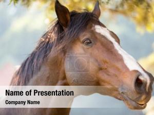 Racing close purebred horse