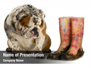 Muddy dirty dog boots english