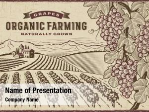 Farming grapes organic landscape