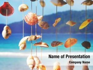 Sea sea shells shore summer