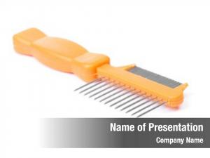 White pet comb