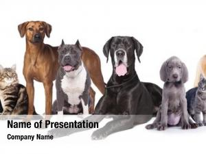 Dogs Powerpoint Templates Templates For Powerpoint Dogs