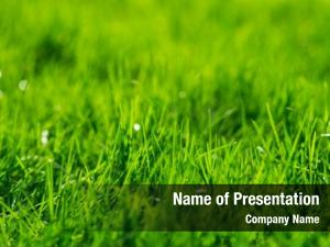 Texture green grass