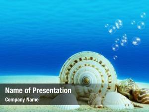 Underwater underwater world,seashells