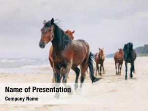 Walking herd horses windy seashore