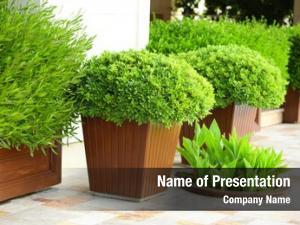 Pot image plant shaped like