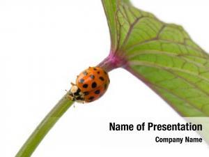 Plant ladybug stem white close