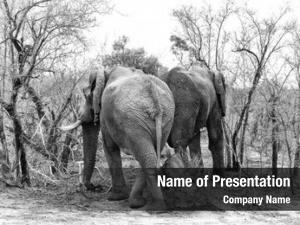 Bush two elephants