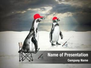 Two funny picture penguins ice
