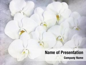 Flowers close orchid beautiful white
