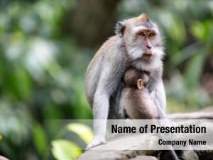 Her female monkey baby sacred