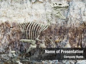Fossilized fossil old skeleton dinosaur