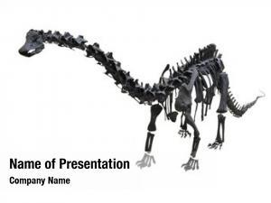 Prehistoric fossil old skeleton dinosaur