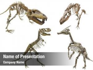 Paleontology fossil old skeleton dinosaur
