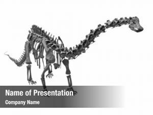 Fossil old skeleton dinosaur