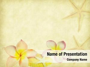 Flower plumeria tropical seashell old