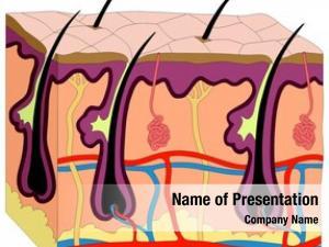 Anatomy human skin cross section