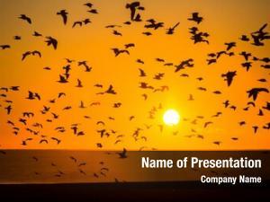Birds silhouettes flocks spectacular sea