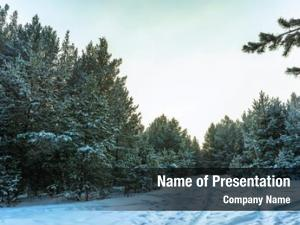 Trees snow covered ural mountains