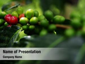 Organic close fresh red coffee