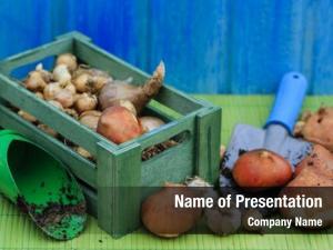 Planting garden, gardening, bulbs spring