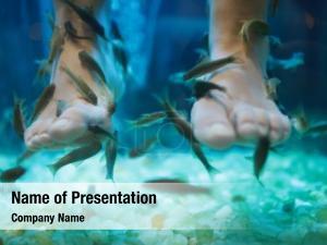 Pedicure fish spa wellness skin