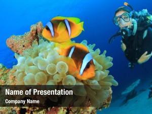 Diver clownfish scuba