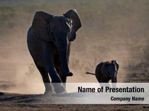 Elephants in the landscape